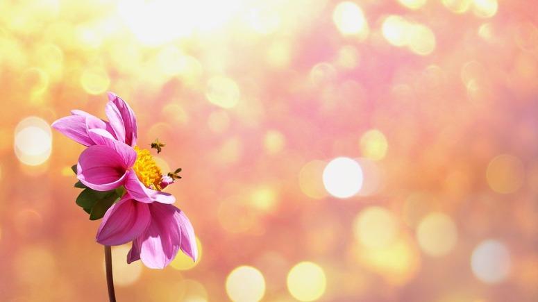 flower-1669899_960_720.jpg