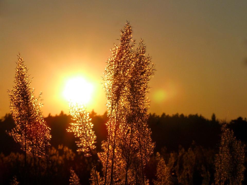 sun-361840_960_720.jpg