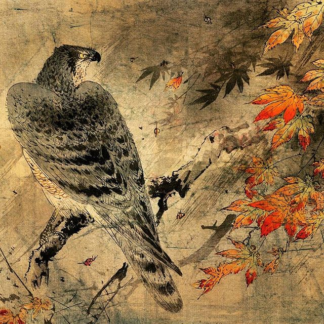 hawk omen, spiritual enlightenment, focused observation, changing perspectives, ordinary, mundane, animal omen, bird omen, hawk art, painting, drawing,