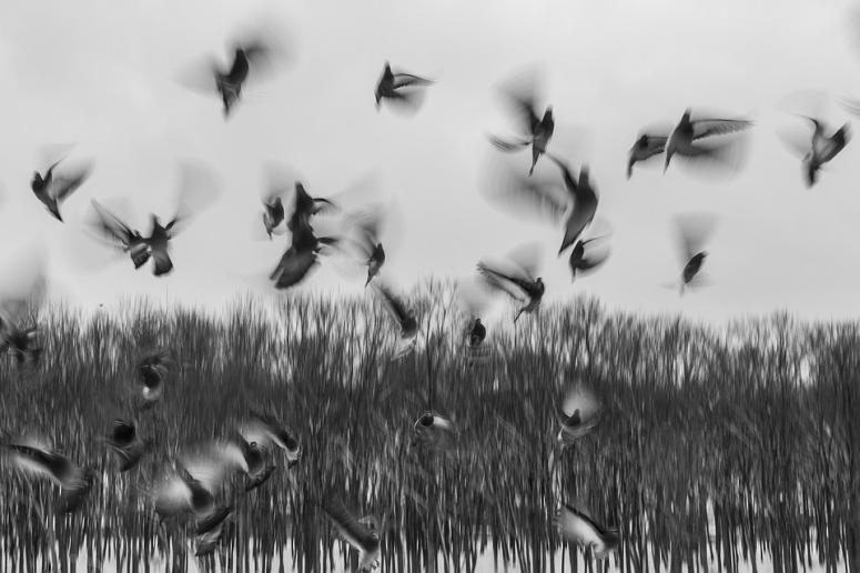 birds-801778_960_720.jpg