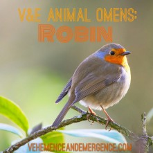 bright future, happiness, joy, hopefulness, simplicity, robin omen, bird omen, animal omen, signs, signifies, birds, baby robin,