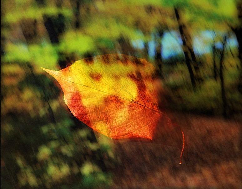 leaf-1808756_960_720.jpg