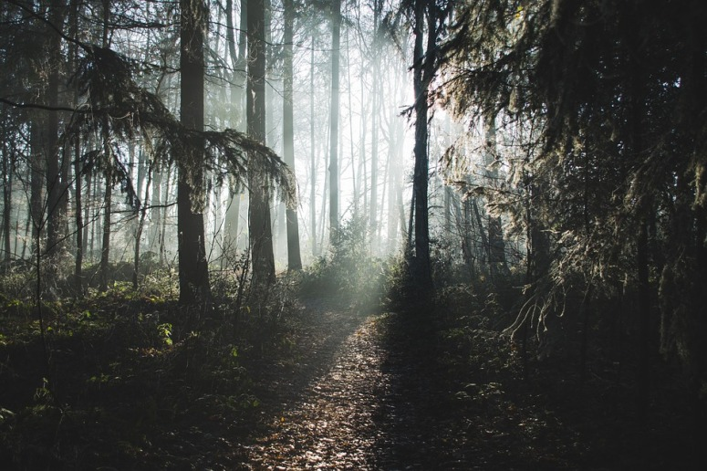 nature-1889519_960_720