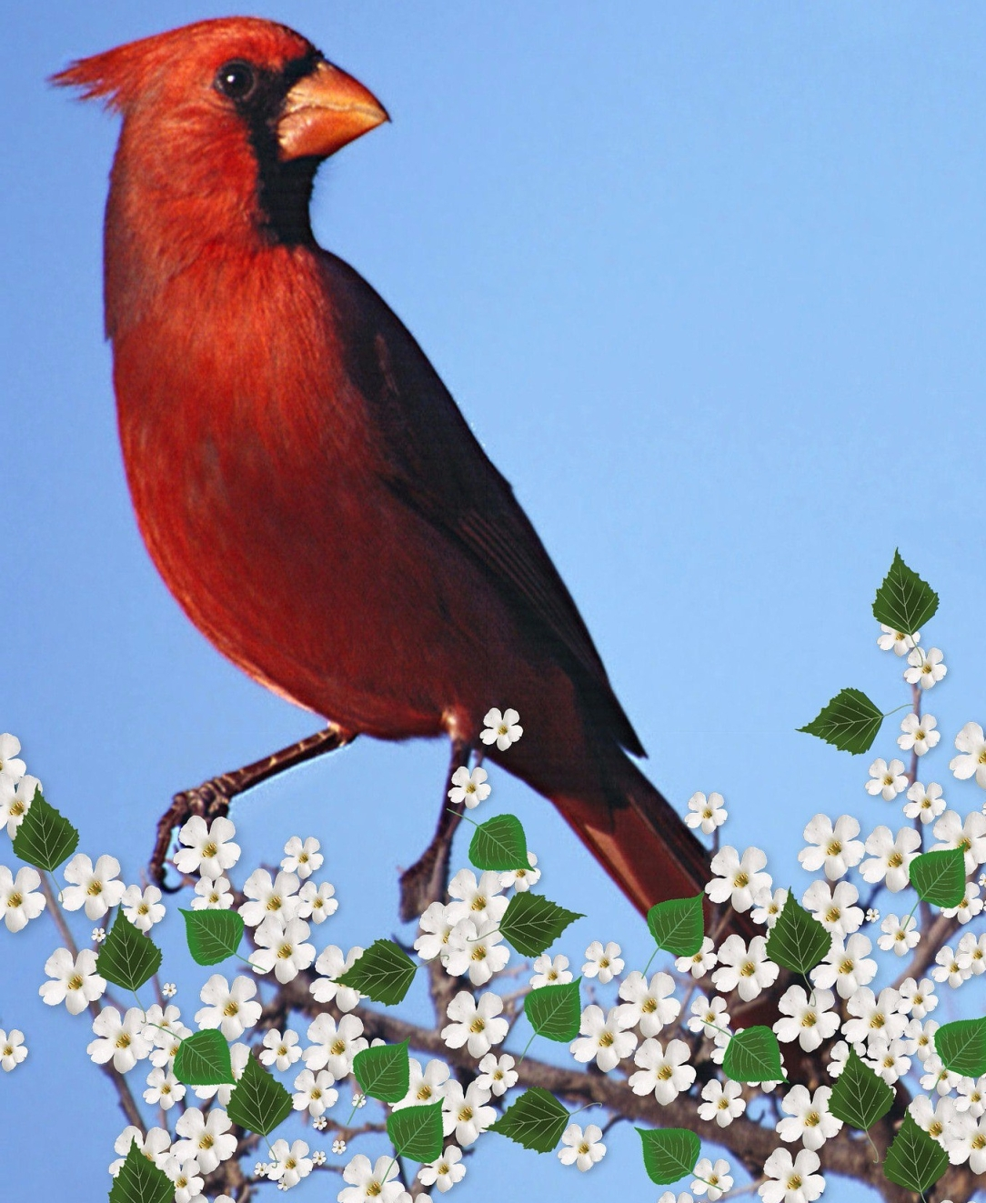 confidence, monogamy, relationships, love, power dynamics, cardinal, cardinal art, cardinal omen, bird omen, animal omen, signs, cherry blossoms