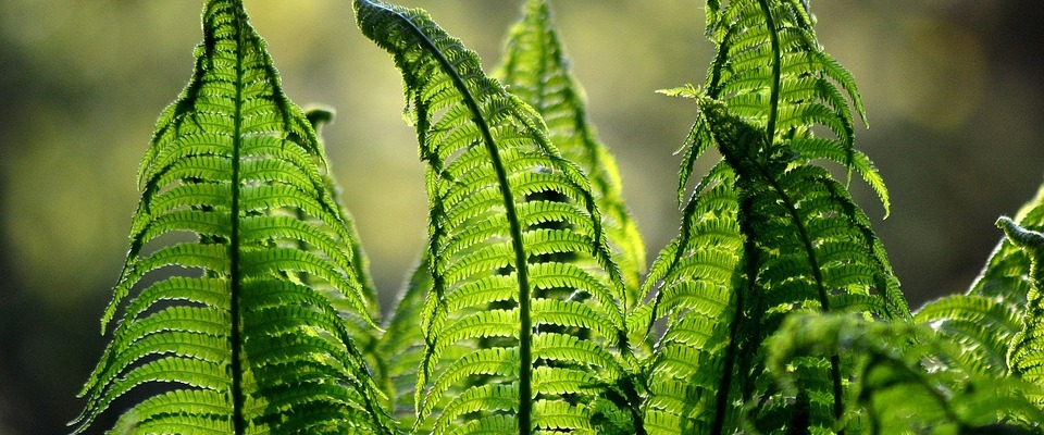 ferns, nature, garden, fern, forest, mindful, peaceful, universe, enjoyment