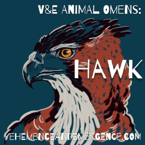 hawk, animal omen, bird omen, hawk art,