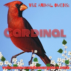 cardinal, animal omen, bird omen, love, relationships, cardinal art