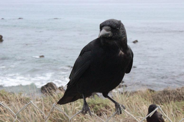 crow-1091609_1920.jpg