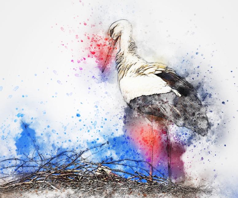 bird-2555756_1920.jpg