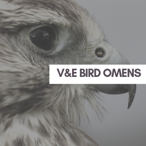 V&E Animal Omens: What it Means When You Find A Dead Bird